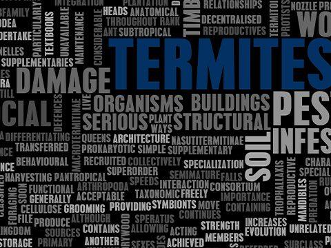 Termite Inspections Frisco TX