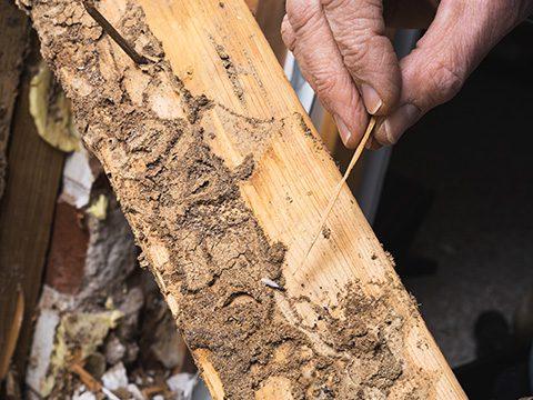 Termite inspections Prosper, TX